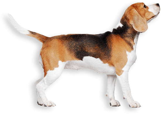 Beagle - Visual Crime Analytics